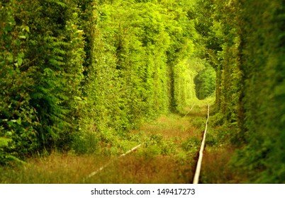 """Natural tunnel of """"love"""" formed by trees in Romania."""
