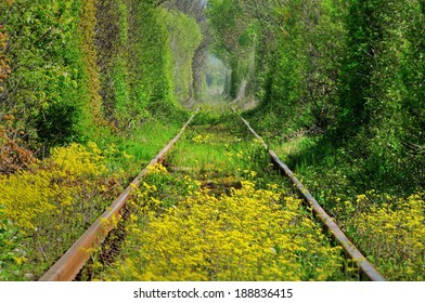 Natural tunnel of love formed by trees in Romania,similar with tunnel of love from Kleven;Ukraina