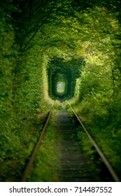 Natural tunnel of love formed by trees.