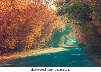 Natural tunnel from trees in autumn