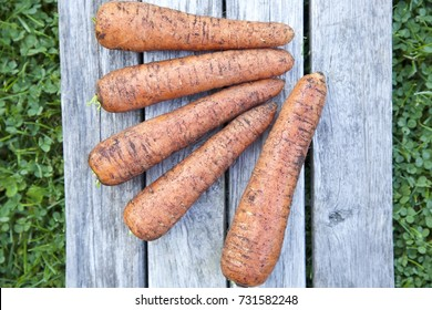 Natural unwashed carrots on a grey wooden table. Green grass background. Top view. Daylight