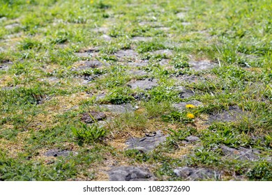 Natural vegetation between cobblestones on the top of a Dutch dike on a sunny day in the spring season.