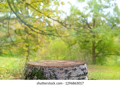 natural view of stump in forest. Wooden stump with Green leaves and Forest on blurred background. Ready for product display. beautiful natural green background, texture for design, copy space