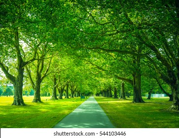 Natural View of Walkway in the Park, Christchurch, New Zealand. Beautiful Pathway with Green Trees.