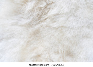 Natural white fur background, design template, copy space