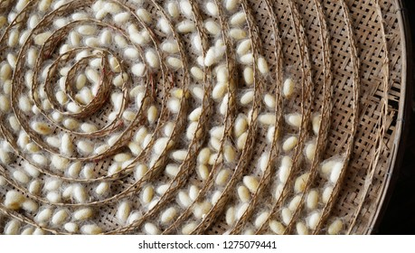 The natural white silkworm cocoon in bamboo weave tray at northeast of Thailand.