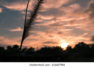natural wild flowers grass at sunset.