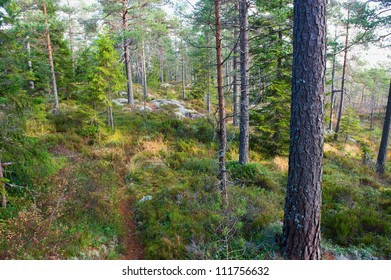Natural wild forest in morning light, Sweden, Scandinavia