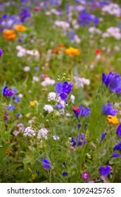 natural wildflower meadow