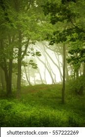 Natural window, forest frame