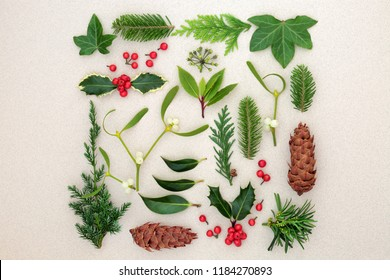 Natural winter nature study with holly berries, mistletoe, ivy, cedar, laurel, yew and juniper fir leaf sprigs with pine cone on mottled cream background. Top view.