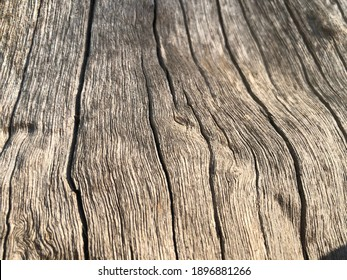 Natural wood grain Dry wood texture close up
