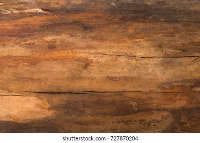 Natural wood texture closeup background. Hardwood surface, old tree bark backdrop