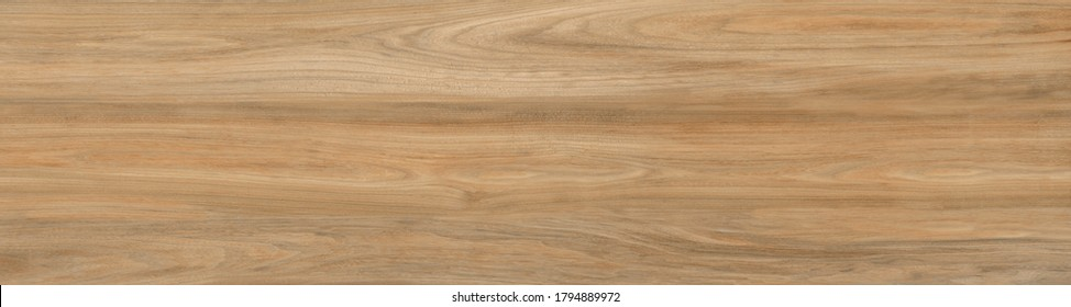 Natural wood texture.Wood oak tree close up texture background.