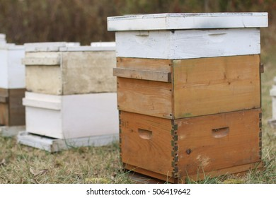 Natural Wood And White Painted Beehives With Supers Containing Thousands Of Honey Bees In Open Pasture Field During The Season Of Fall On A Farm In the Mountains Of South West Virginia