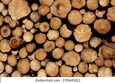 Natural Woodstaple as Background. Maybe it will be Firewood or Wood for Industry