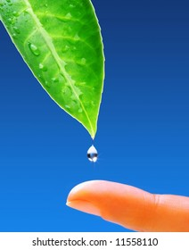 The Natural World. Green leaf with fresh water drops and human body
