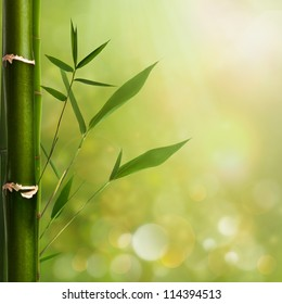 Natural zen backgrounds with bamboo leaves