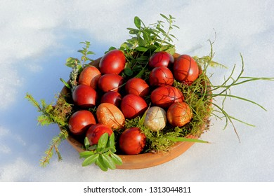 Naturally dyed Easter egs in dish with green moss and plants on snow background. Onion peel painted easter eggs.
