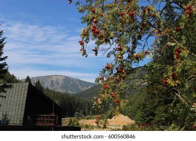 In nature - Shutterstock ID 600560846