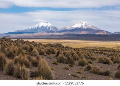 Nature of Altiplano, Bolivia, South America