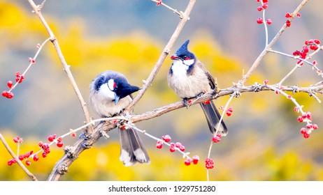 Nature Animal Bird Is Resting Snow Green Cherry
