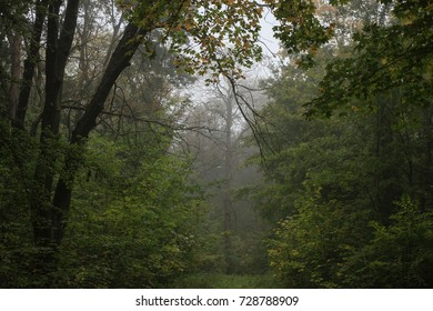 Nature: Autumn Forest