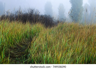 nature in autumn. the grass in the field is high. fog
