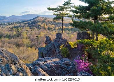 Nature awakening in the spring taiga forest. Bolshekhekhtsirsky Nature Reserve. Khabarovsk region, far East, Russia.