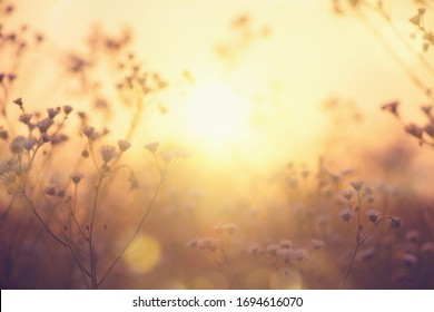 Nature backdrop. Beautiful Meadow with wild flowers over sunset sky. Beauty nature field background with sun flare. Easter nature backdrop. Bokeh, Silhouettes of wild grass and flowers