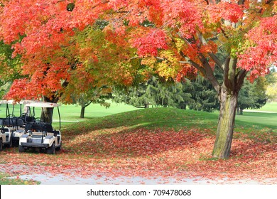 Nature background in autumn colors. Beautiful fall landscape with red colored maple tree close up in sunlight on a golf course, golf carts and red foliage on a ground. Midwest USA, Wisconsin.