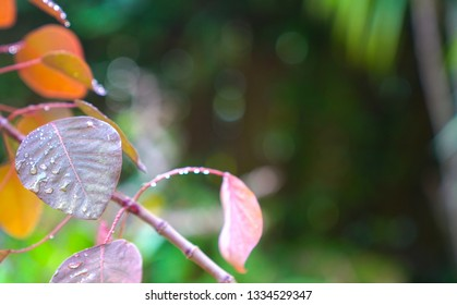 Nature background : brown or red color leaves with green background, copy space