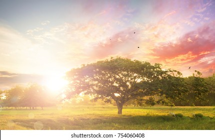 Nature background concept: Alone tree on meadow sunset.