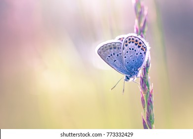 Nature background concept and beautiful summer meadow background. Inspirational nature closeup. Tranquil nature closeup, calm butterfly and colorful natural meadow on defocused background.