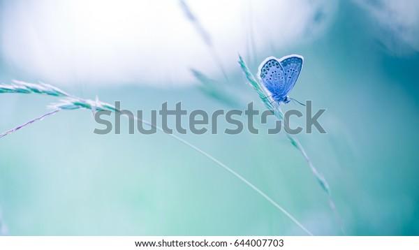Nature background concept. Beautiful summer meadow background. Inspirational nature closeup.