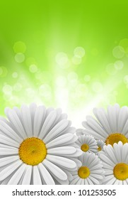 Nature background - daisies