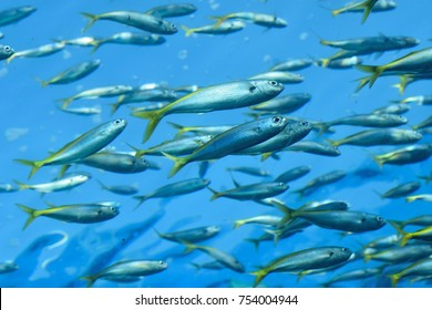 Nature background Fish swimming in deep sea blue waters