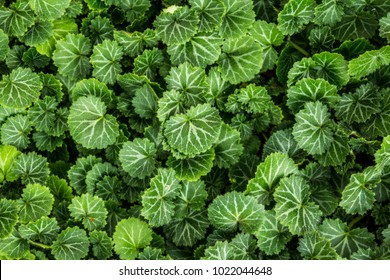 Nature background flat lay of green leaves