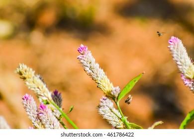 nature background, flower grass
