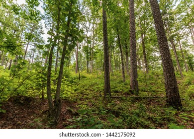 Nature background of a forest in the mountains of southern Appalachia