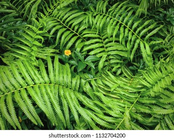 Nature Background of Fresh Green Fern Leaves and Yellow Flower