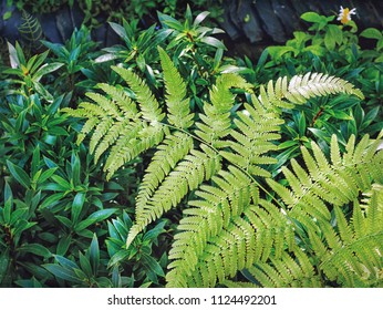 Nature Background of Fresh Green Ferns and Plants