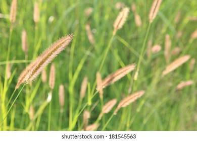 Nature Background - Grass of Plenty - New life of beauty and color wonder