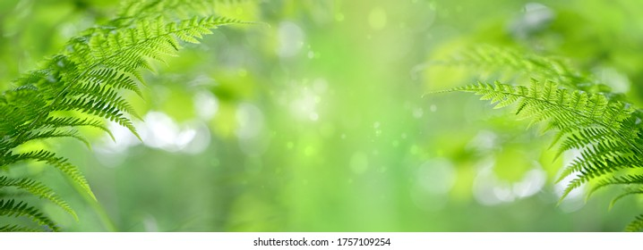 nature background with green fern leaves. pure wild nature, environment, ecology concept. summer forest. copy space. banner. - Shutterstock ID 1757109254