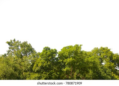 Nature background with green leaves isolated on white background.