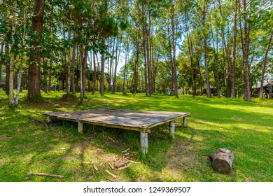 Nature background of landscape Pine Forest with a blue sky and white clouds in the spring afternoon at Thung Salaeng Luang National Park, Phetchaboon, Thailand