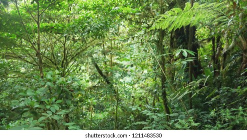 Nature background of lush forest vegetation in a tropical jungle