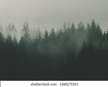 nature background with moody vintage forest