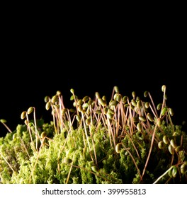Nature background. Moss macro, side lit