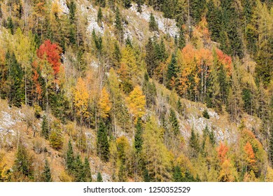 Nature background. Mountain slope  with trees in autumn foliage. Watzmann massif at the mountain lake Königssee in Bavaria, Germany.